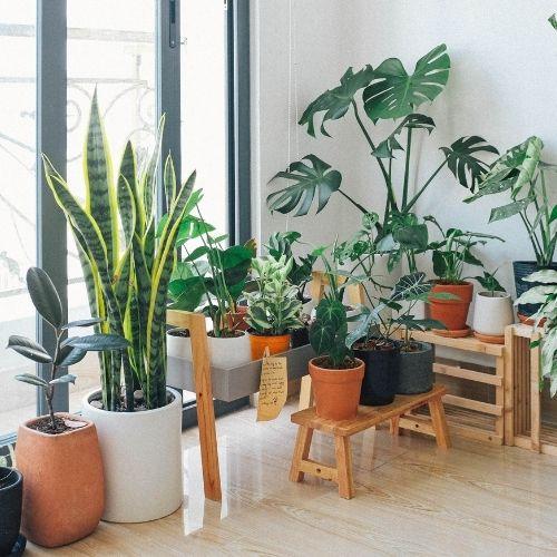 plantes d'intéreiur